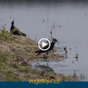 vogelkijkhut
